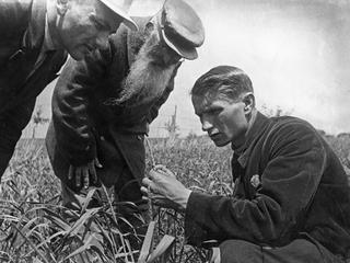 Cytryna Stalina