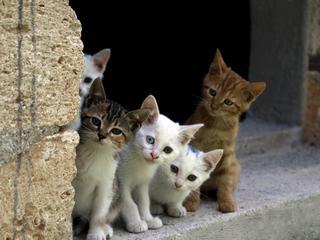 Oglądanie filmów z kotami pomaga w pracy. Są naukowe dowody