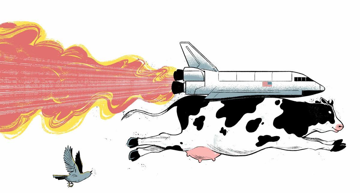 Krowa i odrzutowiec