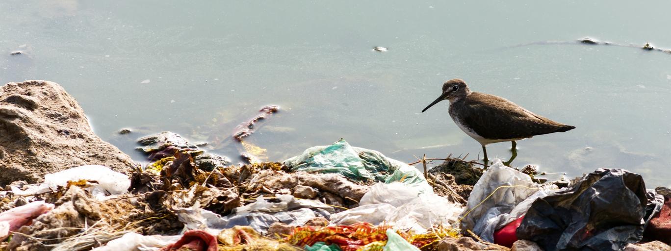 plastik torebka foliowa torba śmieci