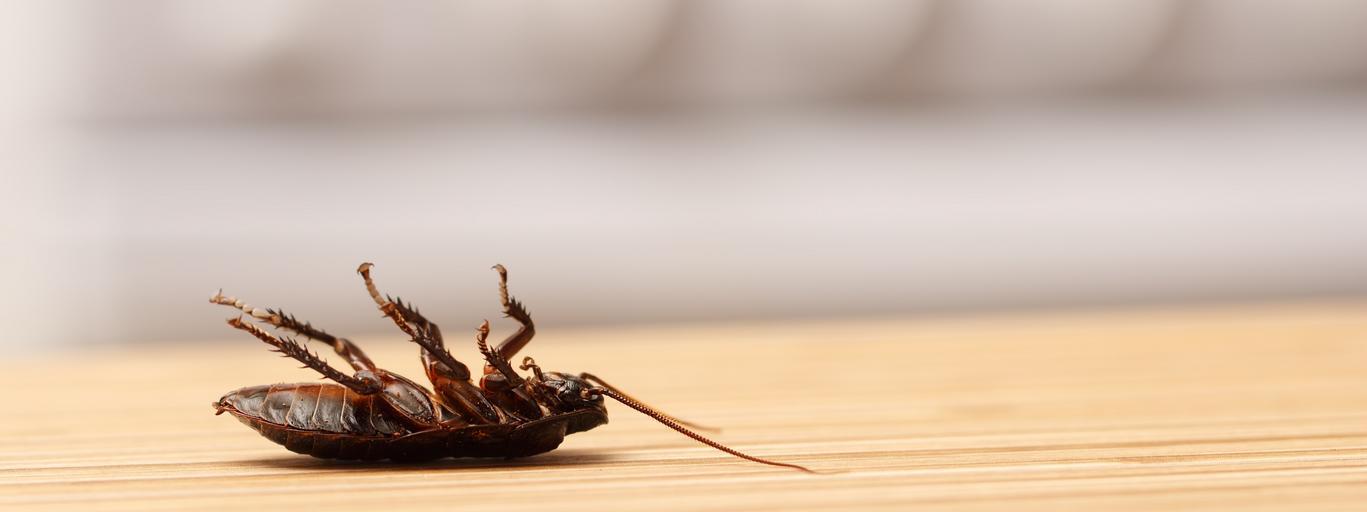 insekt, robak, mieszkanie
