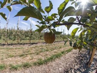 Agroturystyka – hit czy kit?