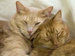 Poprawiają nastrój, podwyższają samoocenę, filtrują powietrze. Jest wiele powodów, by sprawić sobie kota!