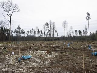 Szyszko nie zrezygnuje z wycinki w Puszczy Białowieskiej