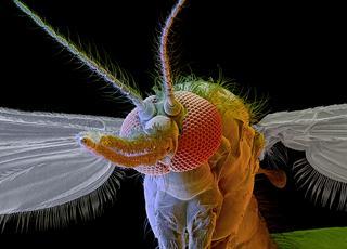Wakacje z komarami
