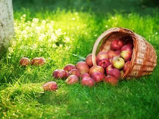 Chcesz schudnąć? Jedz jabłka!