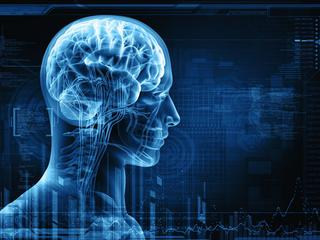 Status społeczny wpływa na budowę naszego mózgu? Zaskakujące odkrycie naukowców