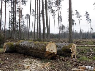 Puszcza Białowieska ocalona? Jest decyzja UNESCO