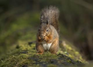 Trędowate wiewiórki
