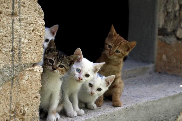Koty zwierzęta