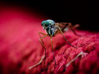 Dlaczego niektórych z nas komary tną jak najęte, a innych omijają?