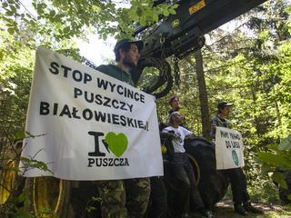 PiS sprywatyzuje lasy, by sfinansować Mieszkanie Plus?