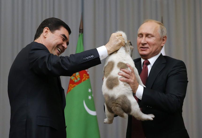 Prezydent Turkmenistanu Gurbanguly Berdimuhamedow podczas szczytu Wspólnoty Niepodległych Państw w Soczi wręcza Władimirowi Putinowi owczarka środkowoazjatyckiego. Szczeniaczek wabi się Wierność i jest przedstawicielem jednej z najstarszych psich ras na świecie.