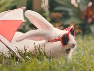 Ministerialna kampania: Polacy powinni rozmnażać się jak króliki