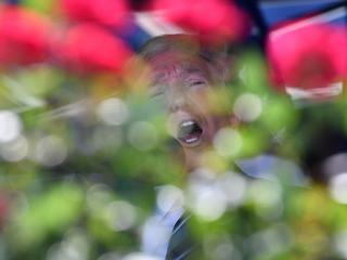 Donald sam w domu