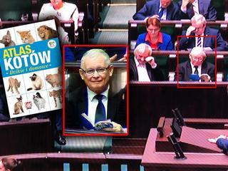 Panie prezesie, ostrożnie z kotkami – czyli Kaczyński w internecie