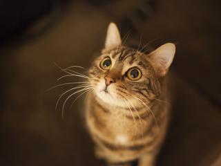 Czy kot może pomóc w walce z rakiem? Naukowcy twierdzą, że tak