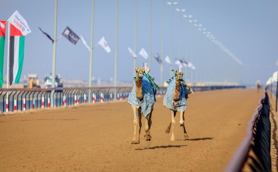 Wyścigi wielbłądów: spotkanie tradycji z nowoczesnością