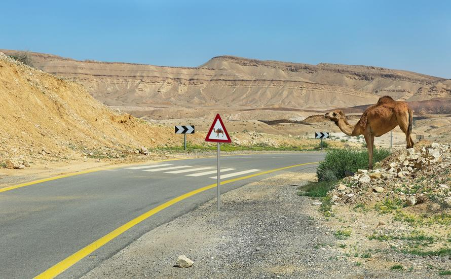 Pustynia Negew. Idealne miejsce aktywnego wypoczynku