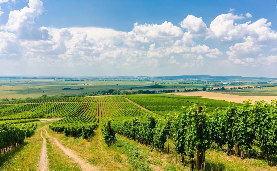 Tokaj - jedna ze stolic węgierskiego winiarstwa