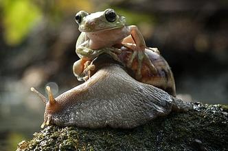 Żaba i ślimak