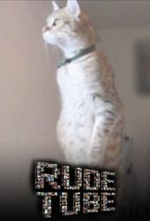 """Rude Tube: """"Koty i psy"""""""