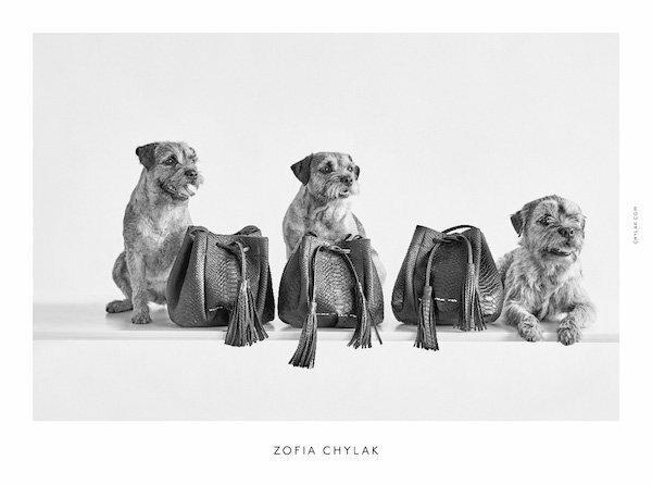 Psy w kampanii Zofii Chylak