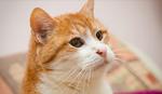 ZBOGOM GARFILDE Uginuo najstariji mačak u Srbiji