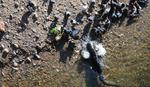 Pogledajte: Somovi love golubove na obali