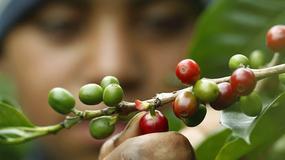 Kostaryka - kłopoty plantatorów kawy
