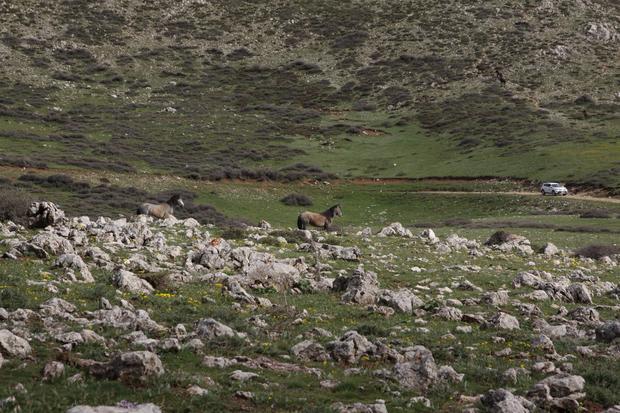 Greckie Mustangi - ukryta w dolinie hodowla stała się dla nich zbyt mała i zbyt nudna. W tle RAV4 i ekipa z Austrii.