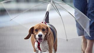 Parasol dla psa podbija Instagram