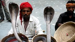 Indie - zaklinacze węży w Bhopal