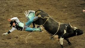 Ujarzmij byka!