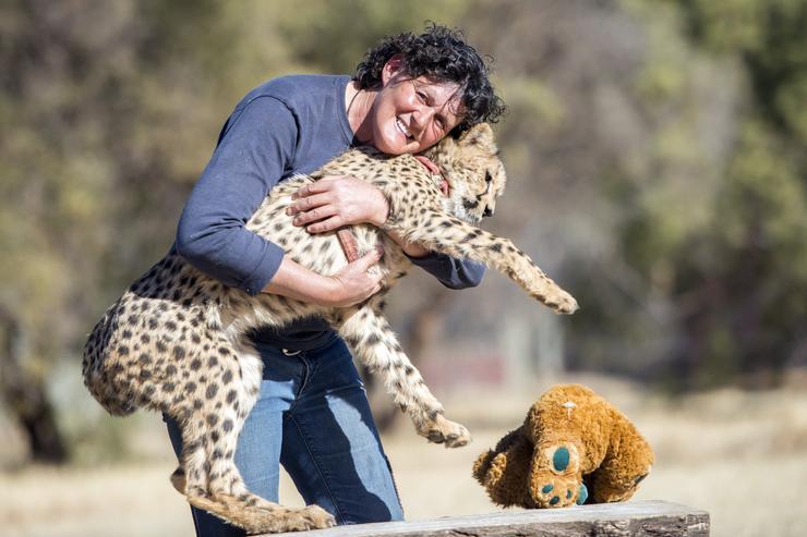 Riana Van Nieuwenhuizen, a Cheetah Experience Founder alapítója egyik kiskedvencével. /Fotó: Northfoto