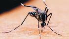 Zaprašivanje komaraca na Paliluli i u Surčinu