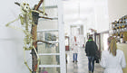 LOBANJE, SKELETI KITA I ŽIRAFE, VOJVODIN KONJ, MEDVED KNINDŽA... Zavirite u neobičan muzej u Beogradu