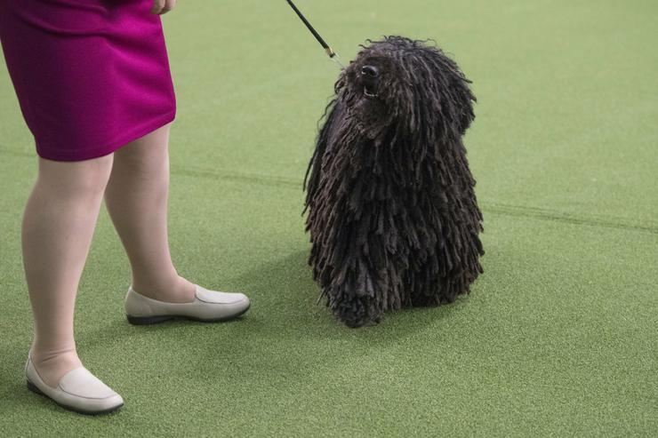 A kutyakiállítást 141. alkalommal rendezték meg/ Fotó: MTI