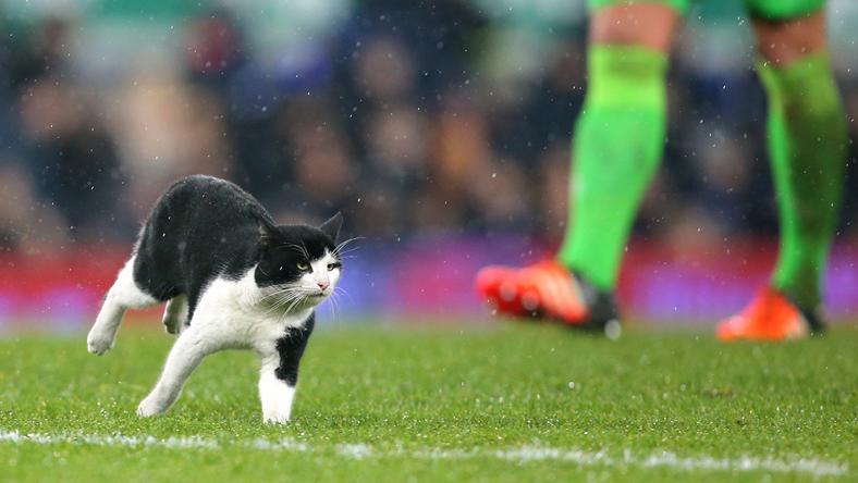 Nem tudni, honnan érkezett, de hirtelen megjelent a gyepen a cica / Fotó: Europress-Getty images
