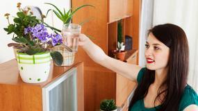 Jak podlewać kwiaty - siedem żelaznych zasad