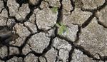 Četiri bačke opštine zahtevaju vanredne mere zbog suše