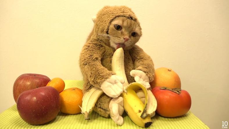 A majom jelmezbe öltöztetett banánevő cica meghódította az internetet