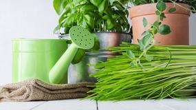 Zdrowa żywność z balkonu? To naprawdę proste!