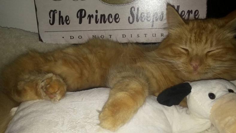 Jesper egy átlagos cicának tűnik / Fotó: Instagram