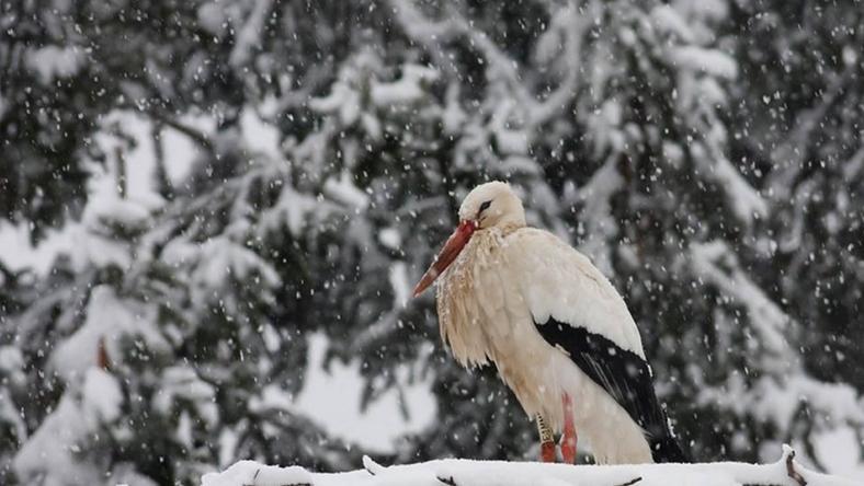 Fülöp még mínusz 20 fokban sem kelt útra /Fotó: Majercsák Bertalan - Aggteleki Nemzeti Park