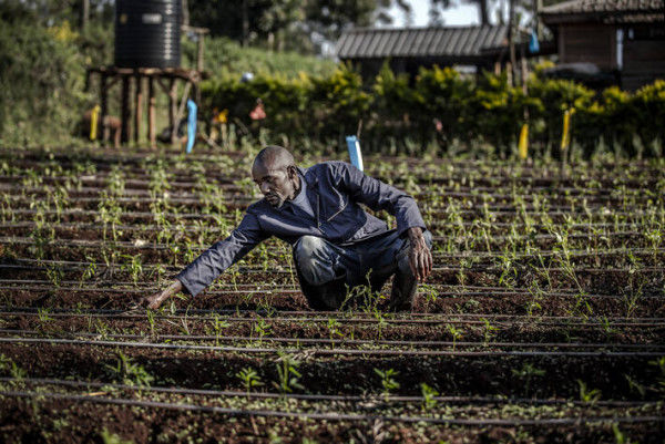 New report finds fruit, vegetables, protein remain out of reach for most Africans