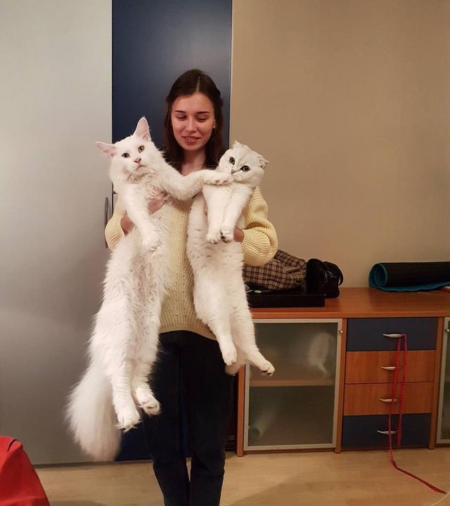 Itt látszik a különbség a legjobban, mennyivel is nagyobb más macskánál / Forrás: Instagram