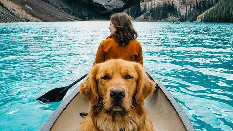 legjobb utitás a kutya - Fotó: Northfoto