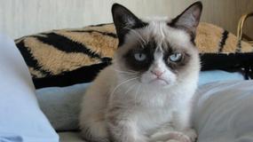 """Kolejny sukces """"Grumpy Cat"""". Kotka dołączyła do obsady musicalu na Broadway`u"""