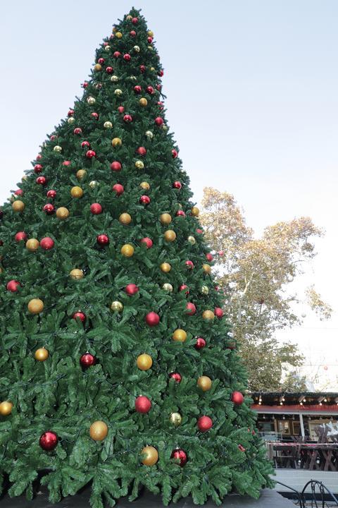Áll már a magas karácsonyfa is, a hószállingózásra azonban még biztos várni kell /Fotó: Grnák László